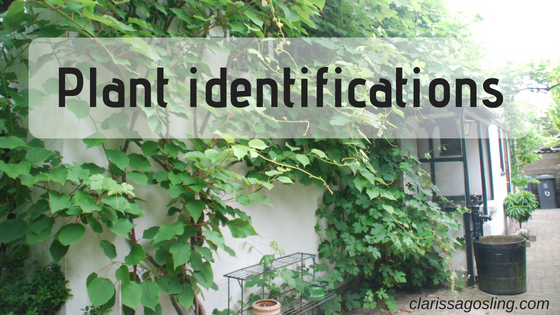 Plant identifications.png
